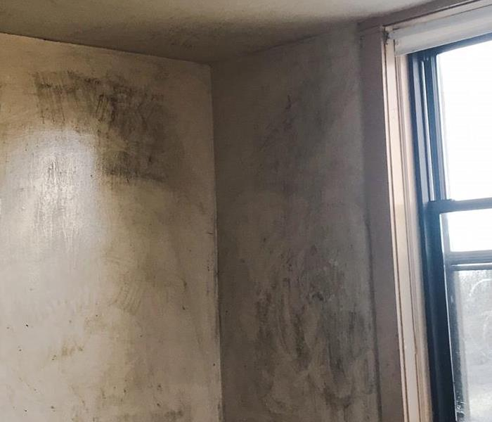 Microbial Growth on Walls Before