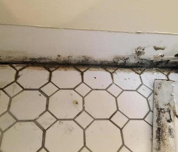black and grey growth on the baseboards of a white wall